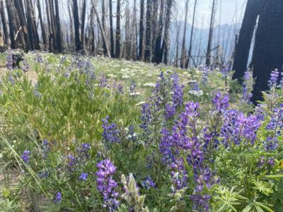 Below the Blaze: How Wildfires Affect Soil